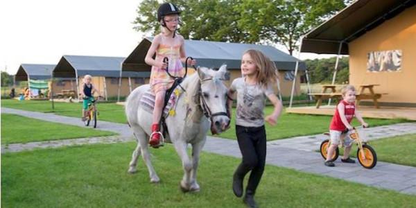 Logeren in een luxe safaritent op FarmCamps Breehees in Goirle Noord-Brabant. Glamping bij de boer voor grote gezinnen met 6 personen. vakantiesvoorgrotegezinnen.nl