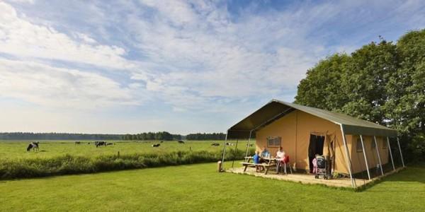 Luxe safaritent, voor glamping in Zweeloo, Drenthe. Met eigen toilet. vakantiesvoorgrotegezinnen.nl